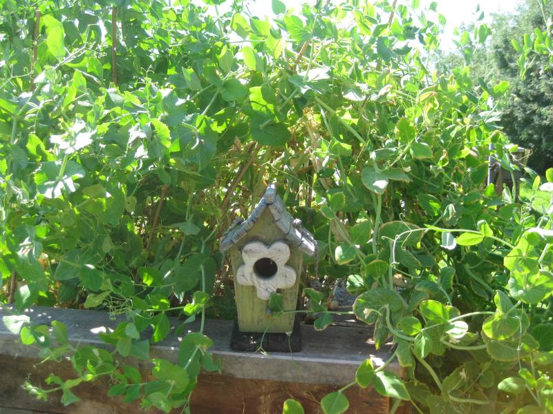 peas & birdhouse